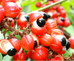 guarana natural herbs