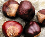 horse chestnut natural herb