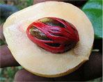 nutmeg natural herbs